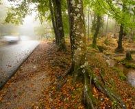 路向'末多在秋天期间的da Albergaria' 库存照片