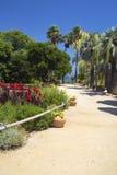 路向有棕榈树和花的海在罐 库存图片