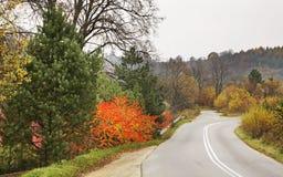 路和森林在Leluchow附近 波兰 图库摄影