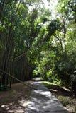路和竹子在石标植物园里 免版税图库摄影