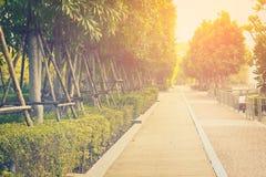 路和美好的日落在公园 免版税库存照片