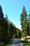 路和风景在特兰西瓦尼亚, Moeciu,罗马尼亚森林里  免版税库存图片