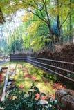 路在一个竹公园 免版税库存图片
