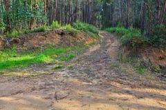 路在一个绿色森林里在春天 库存图片