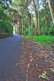 路在一个绿色森林里在春天 图库摄影