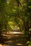 路在一个美丽的夏天森林里 免版税库存图片