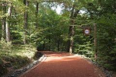 路在一个美丽的森林里与距离s的秋天早晨 免版税库存照片