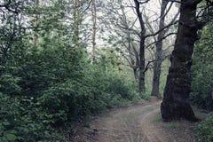 路在一个黑暗的森林里 免版税库存照片