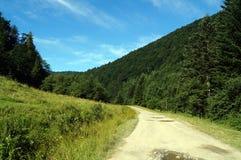 路在一块绿色沼地附近的一个山森林里 免版税图库摄影