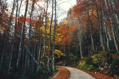路在五颜六色的秋天森林里 图库摄影