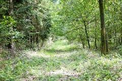 路在优质狂放的森林的背景中 免版税图库摄影