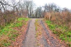 路在公园秋天 库存照片