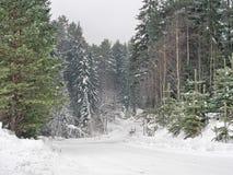 路在冬天森林里 库存照片