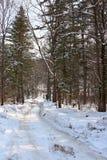 路在冬天森林里 免版税库存照片