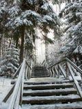 路在冬天森林里 免版税库存图片