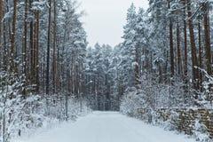 路在冬天雪森林里 库存照片