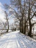 路在冬天 免版税库存图片