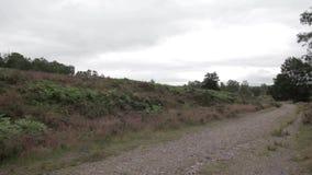 路在坎诺克追逐森林,英国 影视素材