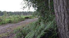 路在坎诺克追逐森林,英国 股票视频
