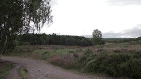 路在坎诺克追逐森林,英国 股票录像