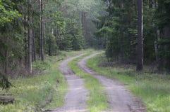 路在夏天森林波兰里 库存照片