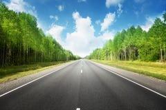 路在夏天森林里 免版税库存照片