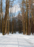 冬天森林 库存图片