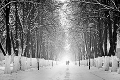 路在多雪的森林里 免版税图库摄影