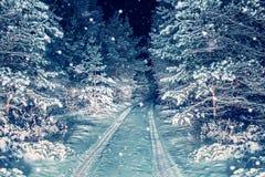 路在夜多雪的森林里 免版税库存图片