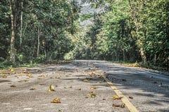 路在密林- Pala U瀑布华欣泰国 图库摄影