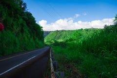 路在山密林 库存照片