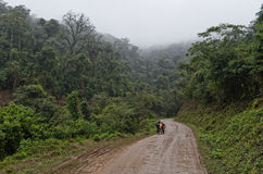路在山森林里 库存图片