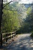 路在春天森林 库存照片