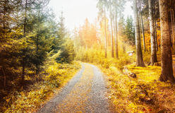 路在有太阳光芒的美丽的秋天森林,秋天自然背景,软的焦点里 免版税库存照片
