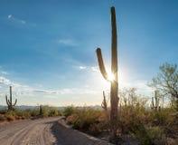 路在有柱仙人掌的Sonoran沙漠 免版税库存图片