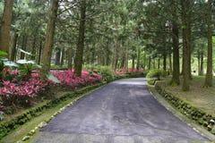 路在有花和树的一个庭院里 免版税库存照片