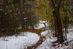 路在有雪和黄色叶子的秋天森林里 免版税库存照片
