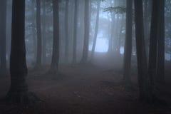 路在有雾的秋天天 免版税图库摄影