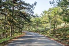 路在杉木森林里 免版税库存照片