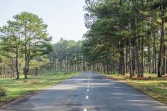 路在杉木森林里 库存照片