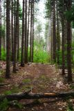 路在树之间的森林里与falled树干 库存照片