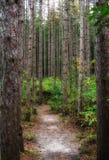 路在树干之间的森林里 图库摄影