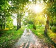 路在桦树森林里 库存照片