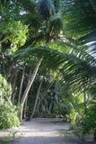 路在棕榈树丛里 免版税库存图片