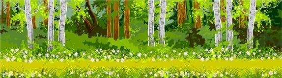 路在森林全景 图库摄影