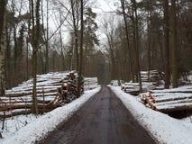 路在森林在冬天 库存图片