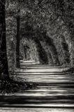 路在森林地TX -黑色&白色 免版税图库摄影