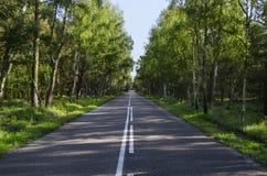 路在森林库尔斯沙嘴里 晴朗的日 免版税库存图片