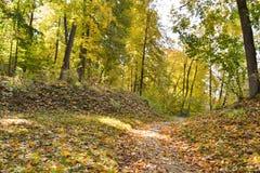 路在森林撒布与被染黄的下落的叶子,一个美好的秋天风景里 库存照片