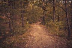 路在森林里每秋天天 免版税库存图片